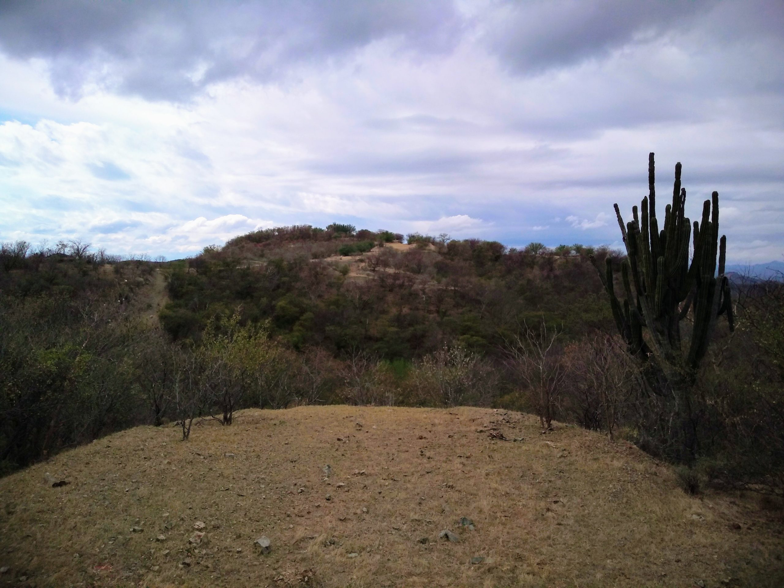View from 4 Trench looking West to Main Zone at Pilar, with cactus